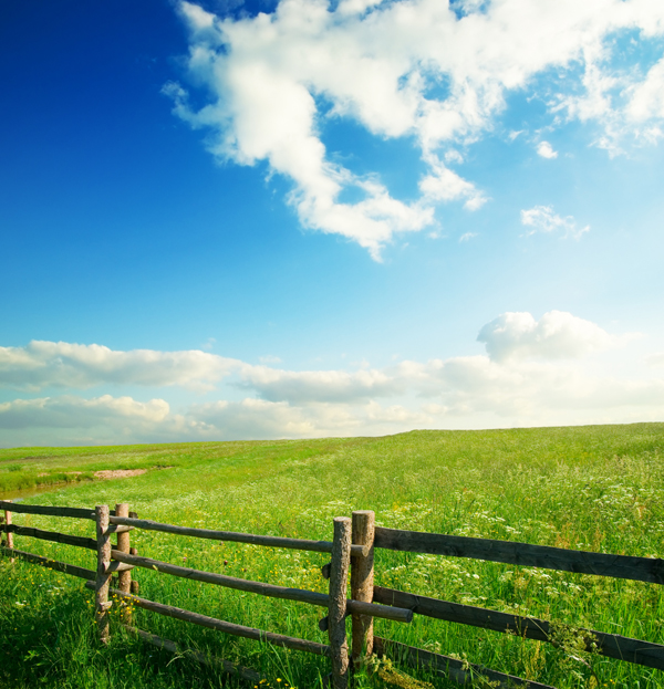 blue_sky_grass_from_the_grass_highdefinition_picture_11