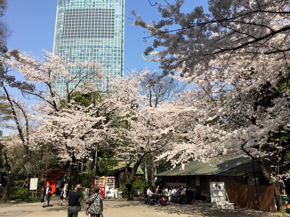 愛宕神社から見た桜と虎ノ門ヒルズ